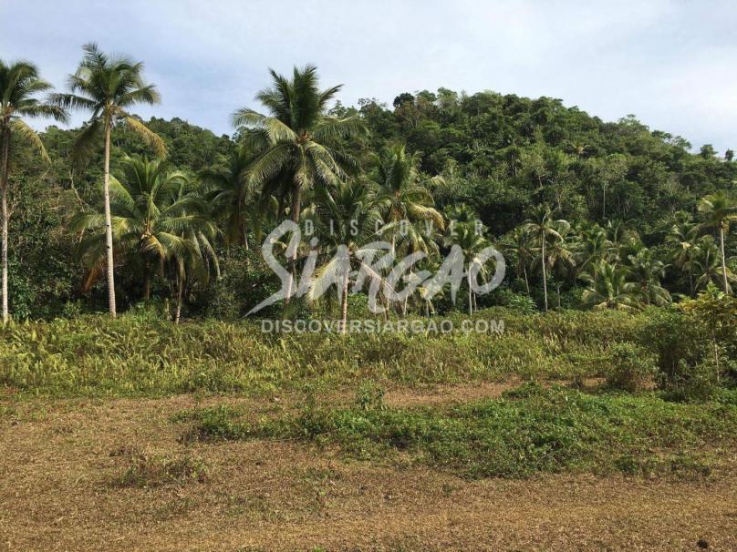 18.7 Hectare or 187,530 sqm Land For Sale in Osmena Dapa Siargao