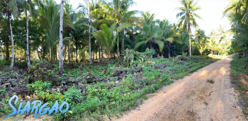 12,294 sqm Lot For Sale along the Road in Catangnan Generl Luna Siargao