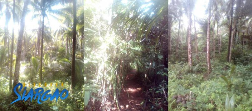 2 Hectare Lot For Sale in Magsaysay General Luna Siargao Island