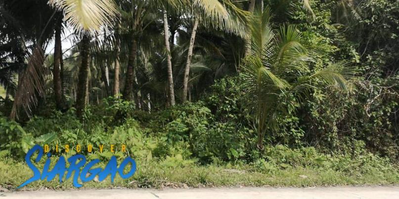2,801 sqm Roadside Property Lot For Sale in Malinao General Luna Siargao