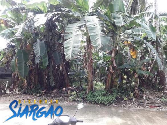 396 sqm Lot For Sale in Del Carmen Siargao Island