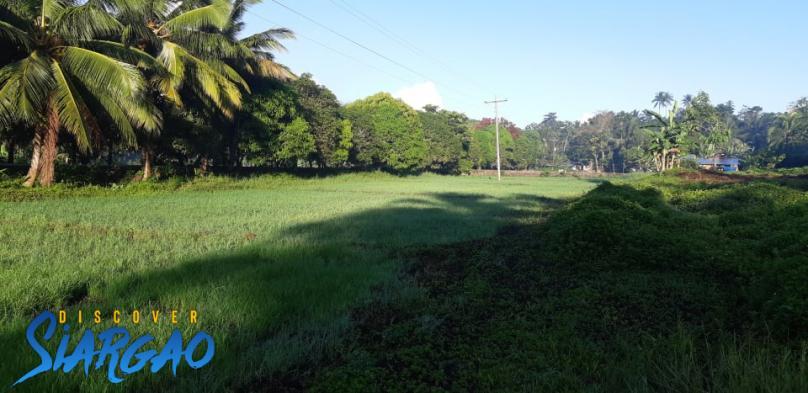 1,000 sqm the highway in Tawin-tawin General Luna Siargao