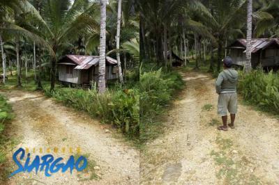 4 Hectare Land For Sale In Bongdo San Benito Siargao Island