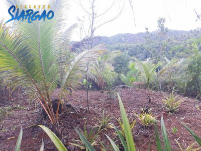 5,060 sqm Overlooking View Lot Union Siargao Island For Sale