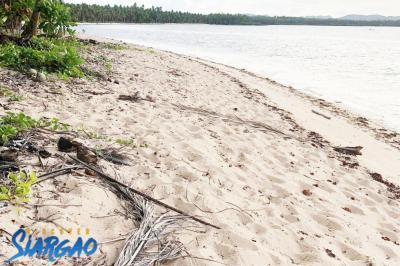 893 sqm White Sand Beach Front For Sale in Sta. General Luna Siargao