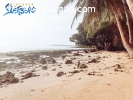 1.2 hectare Beach Front in Libertad General Luna Siargao